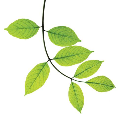 Plant Biostimulant