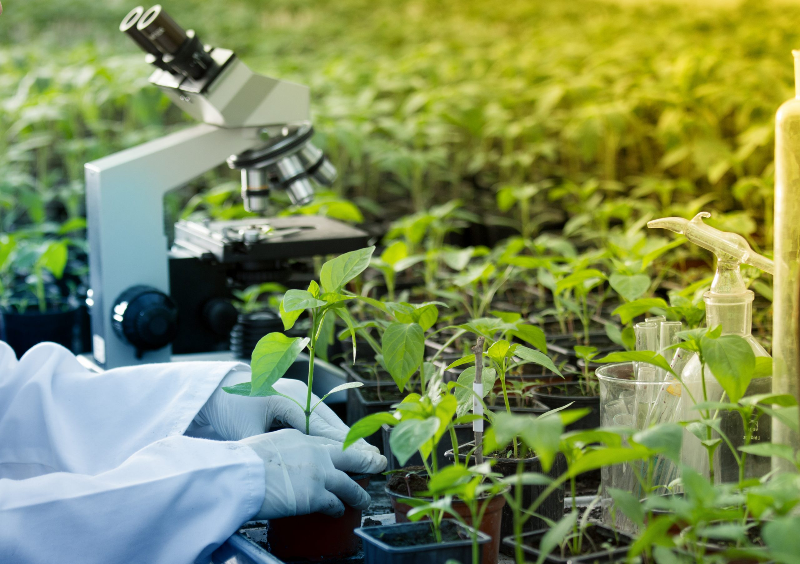 Biotecnologia Agricultura LIDA Plant Research
