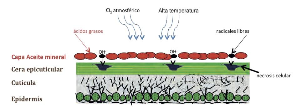 stressoil-stress-oxidativo