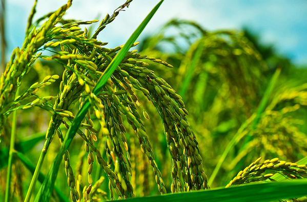 La agricultura del futuro y el uso eficiente del agua