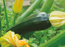La estrategia verde de LIDA es la vía para hacer frente al estrés en nuestros cultivos