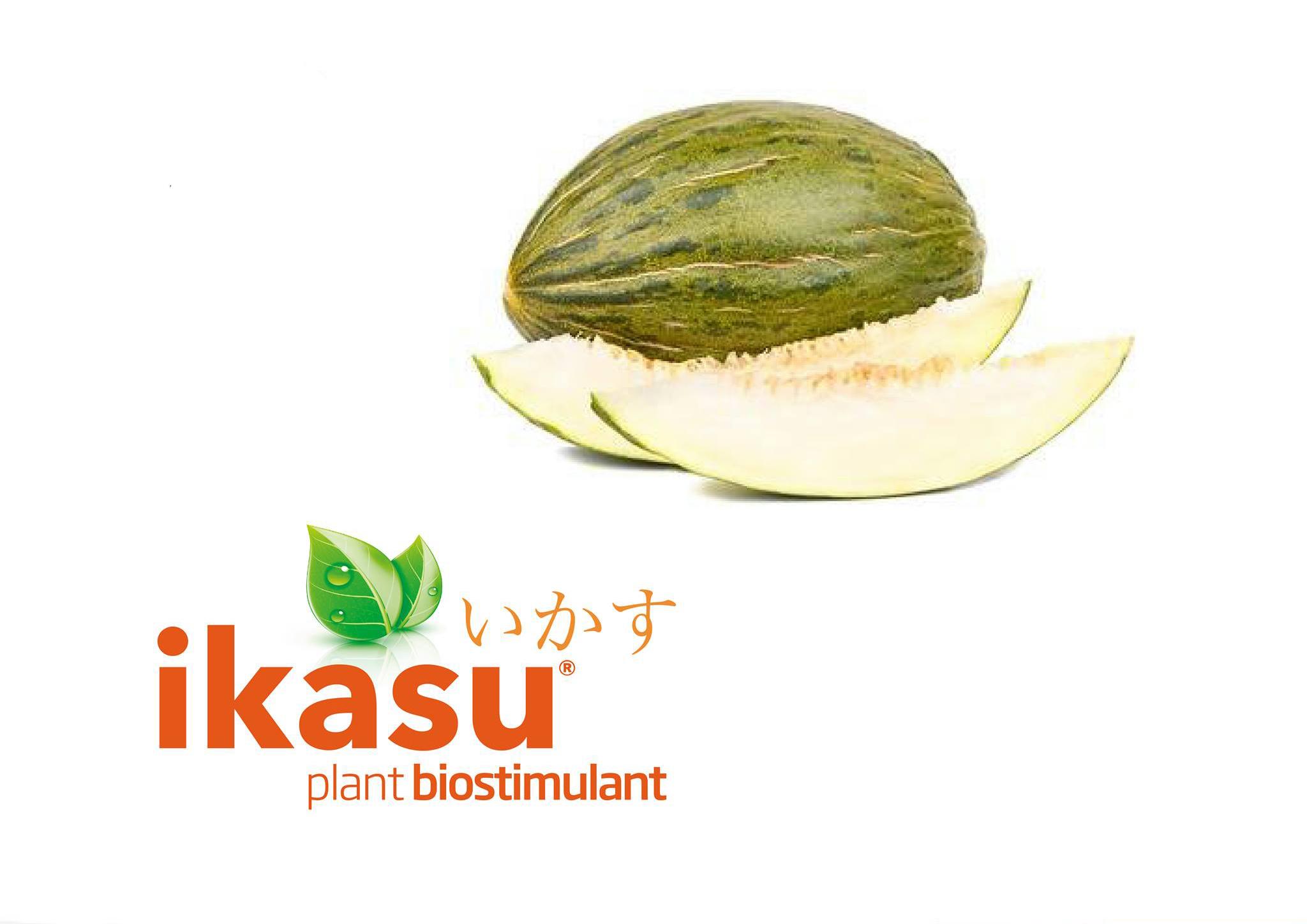 Nuevo Bioestimulante para aumentar la cantidad final de cosecha en el melón