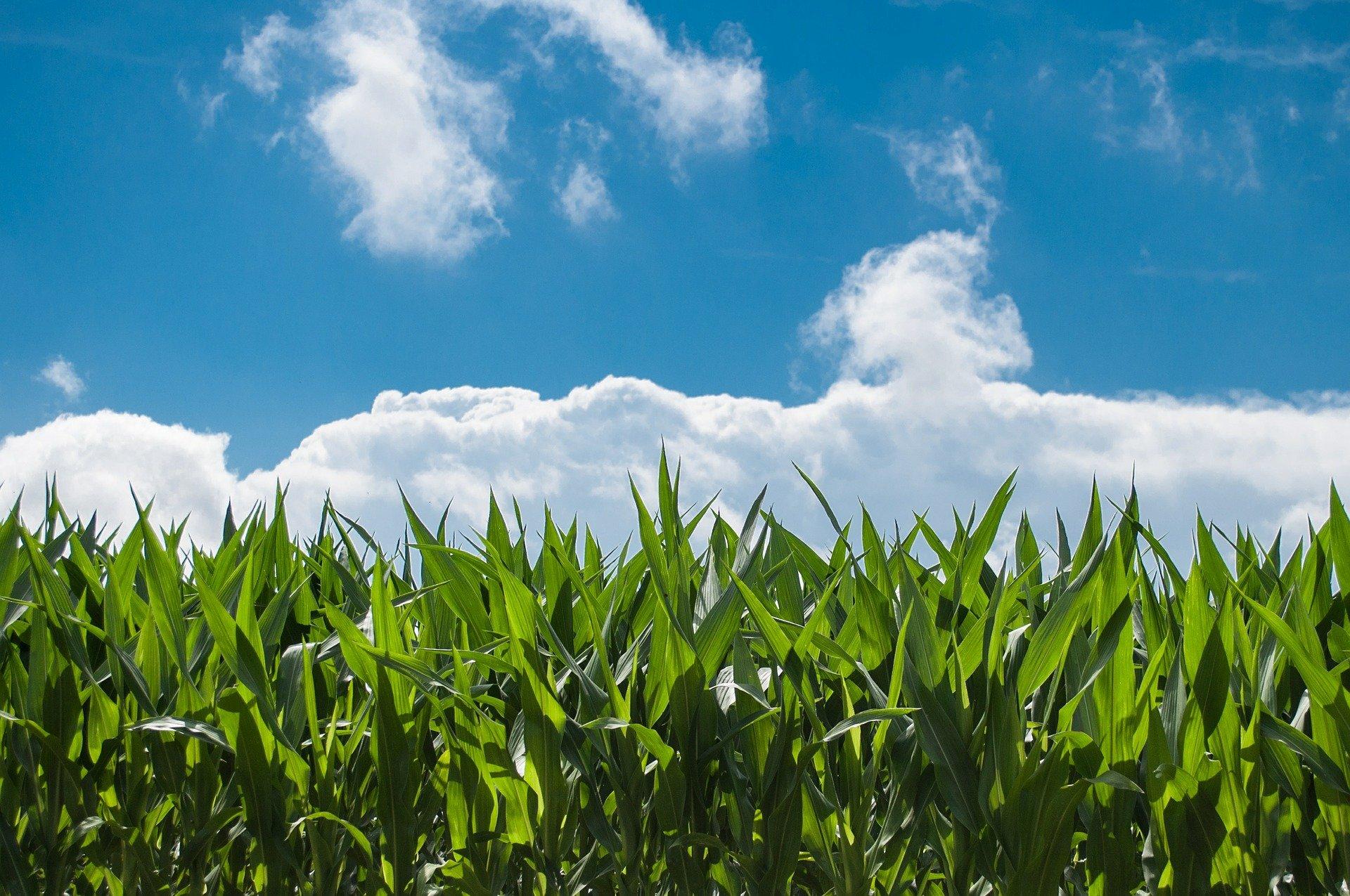 7 falsos mitos de la agricultura ecológica