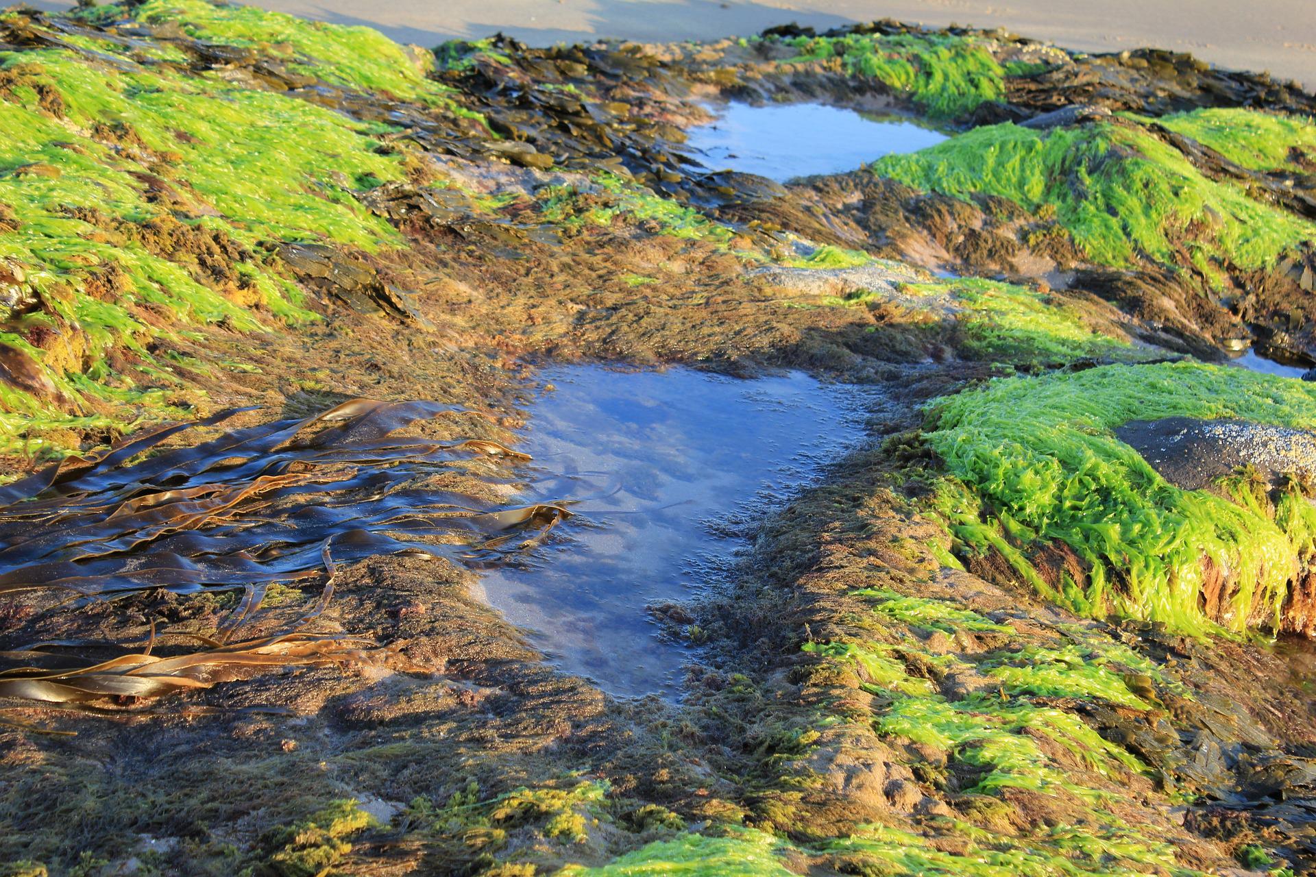 Sesión formativa para Centroamérica: Bioestimulantes, extractos de algas
