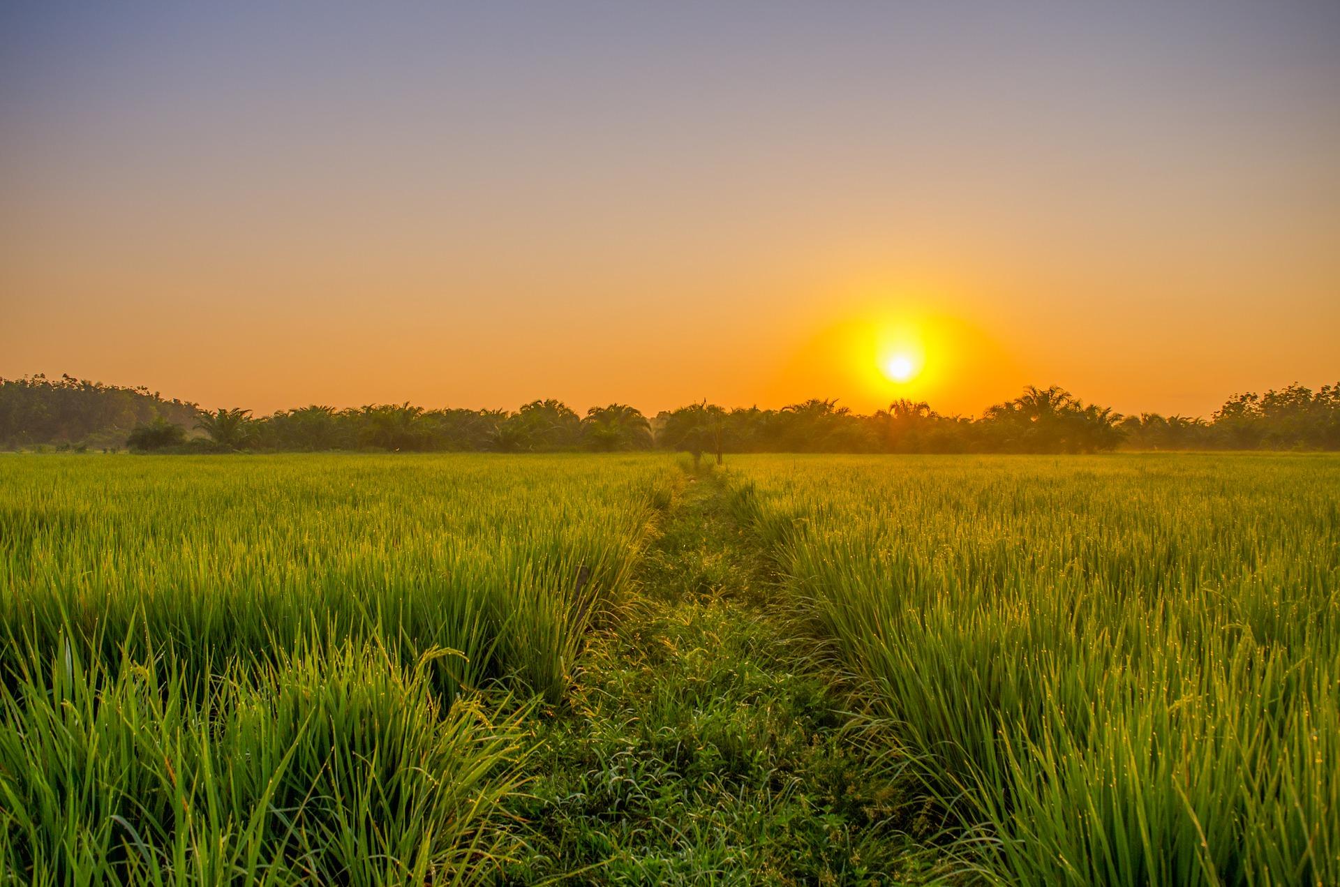 ¿Por qué el Ingeniero Agrónomo y el Técnico Agrícola son necesarios para la sostenibilidad del planeta?