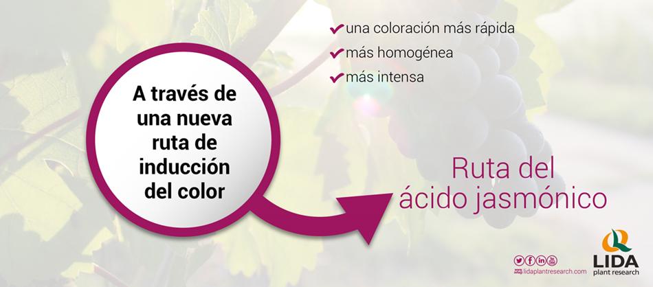 color de la uva de mesa