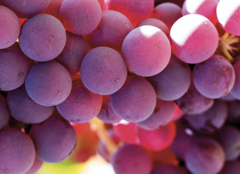 Cómo estimular el color de la uva de mesa