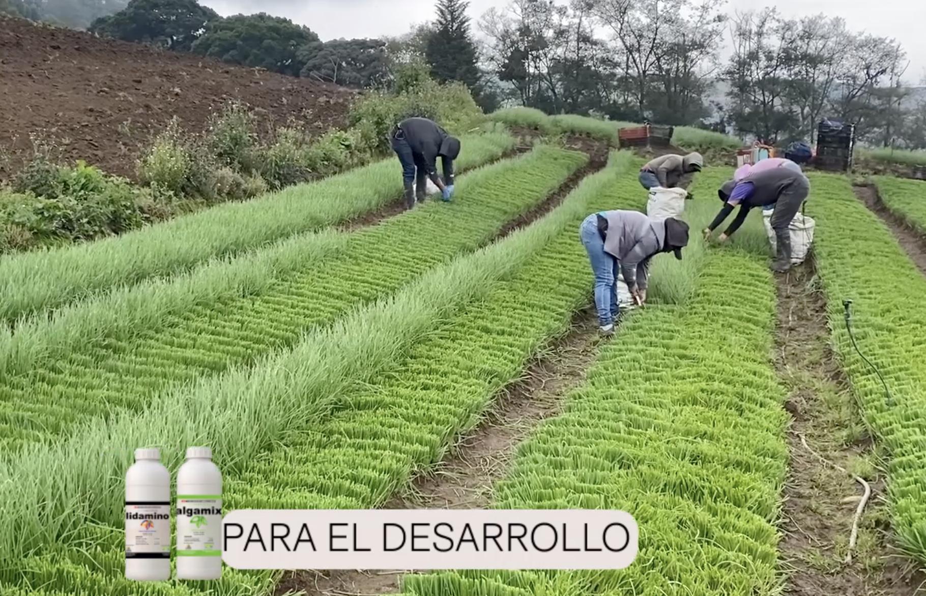 Caso de éxito: Productos para un correcto crecimiento vegetativo