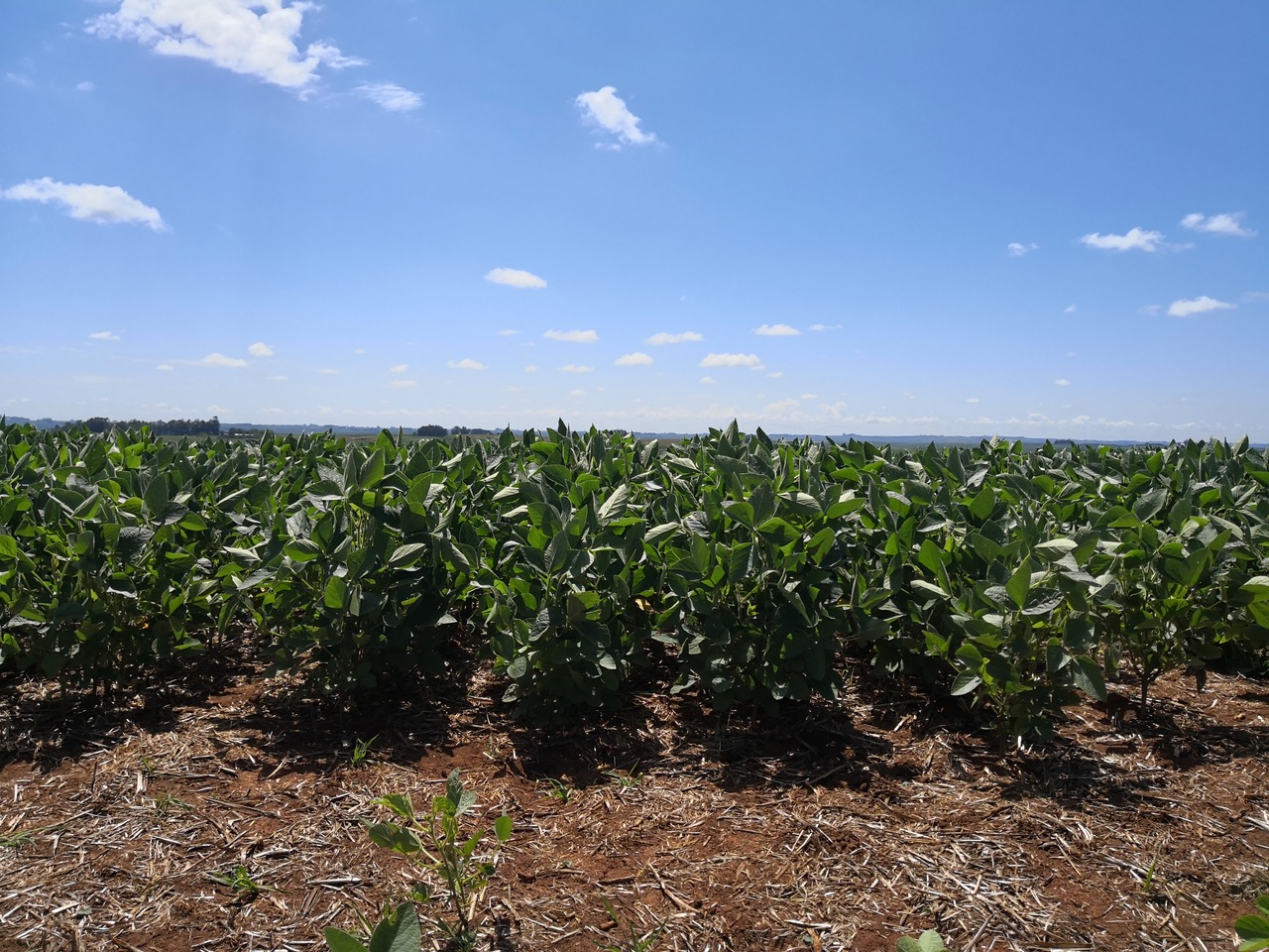 ¿Por qué la sociedad no puede prescindir de la labor del ingeniero agrónomo?