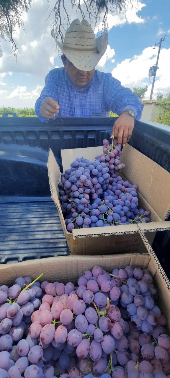 Uso bioestimulante Neostren forte en viña para climas tropicales